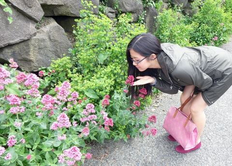 There are so many flower bushes everywhere in Seattle!!! (cr: Lucy)