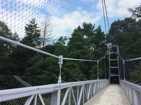 Bridge or bird aviary?