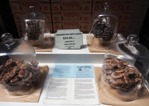 Grow your own shiitake?!