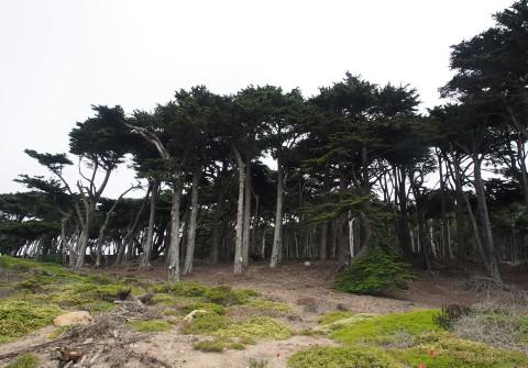 7-trees