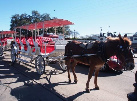 9-mule