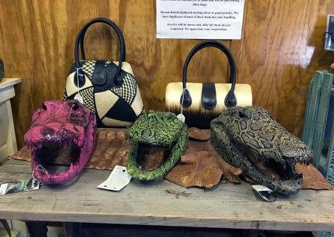 2-gator-heads