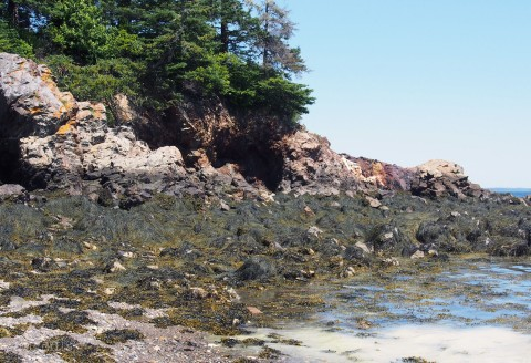 4-seaweed